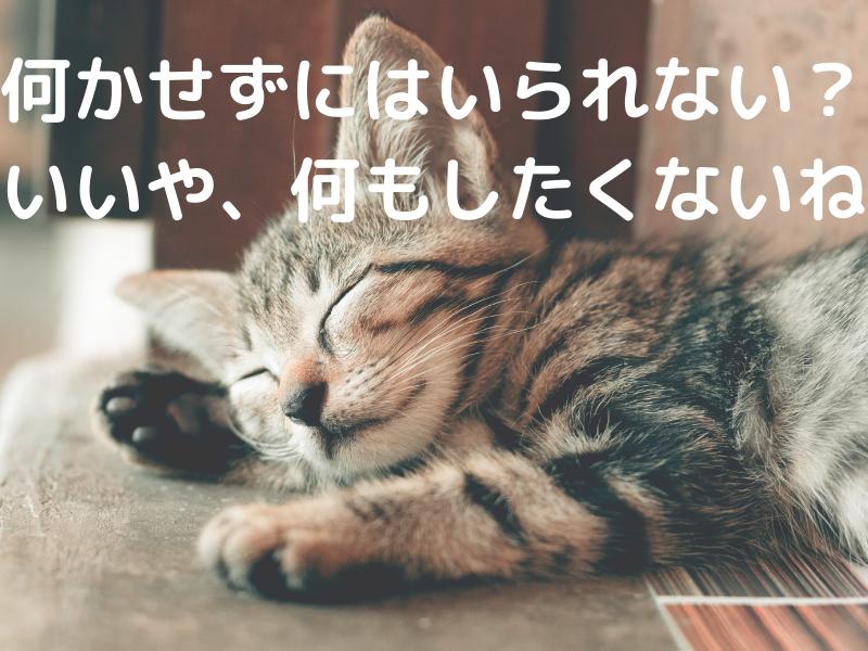何もしたくない猫