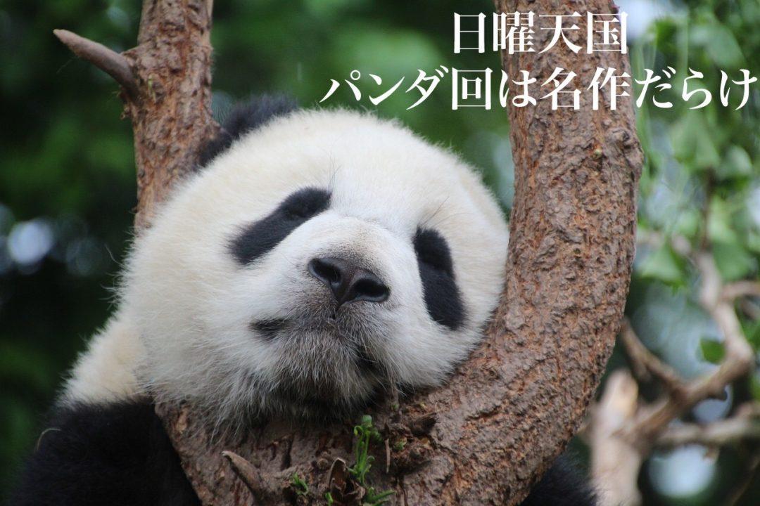 日曜天国・パンダ回