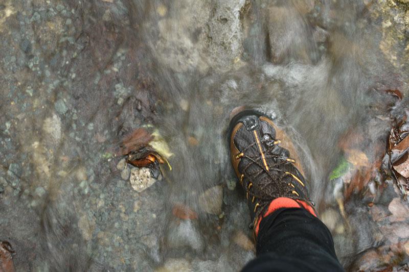 奥入瀬渓流の水たまり